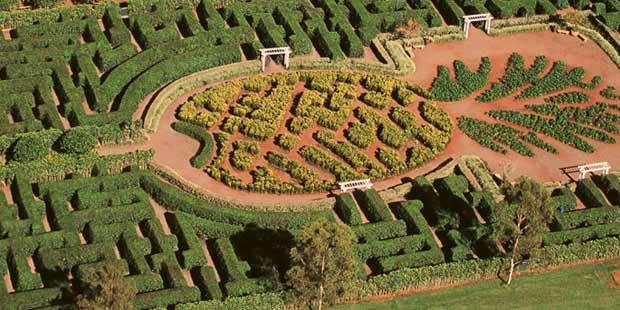 Dole Plantation Maze