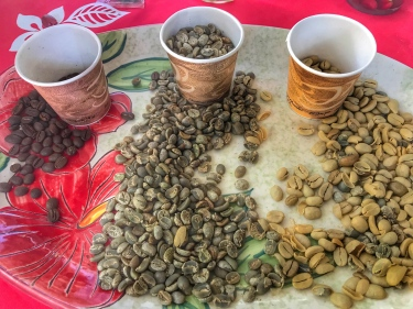 Coffee Tour - Types of Beans