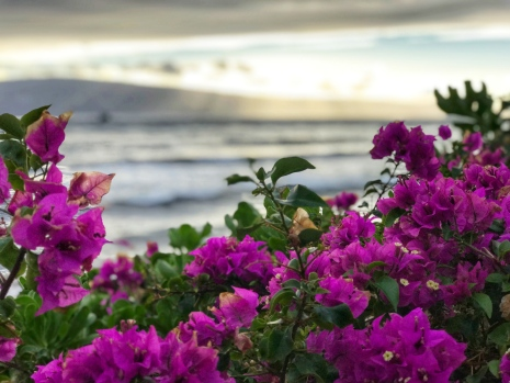 Maui beach with bougainvilla