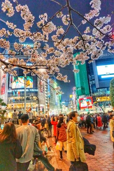 Shibuya 9