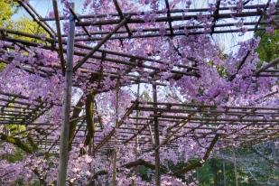 Heian Garden 3
