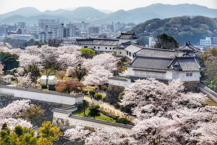 Himeji Cherry Blossom View