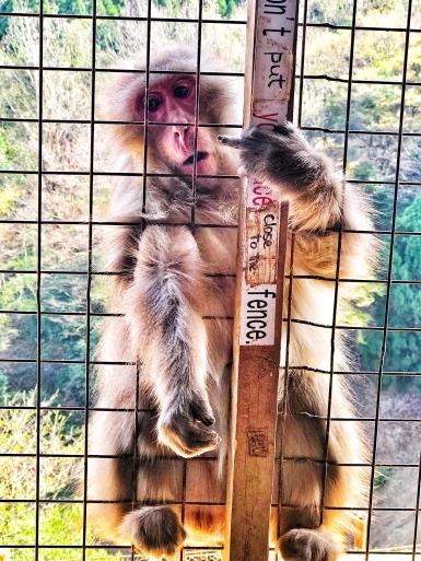 Monkey Park 2